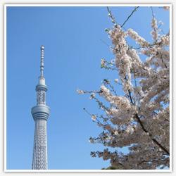 towa-home-01